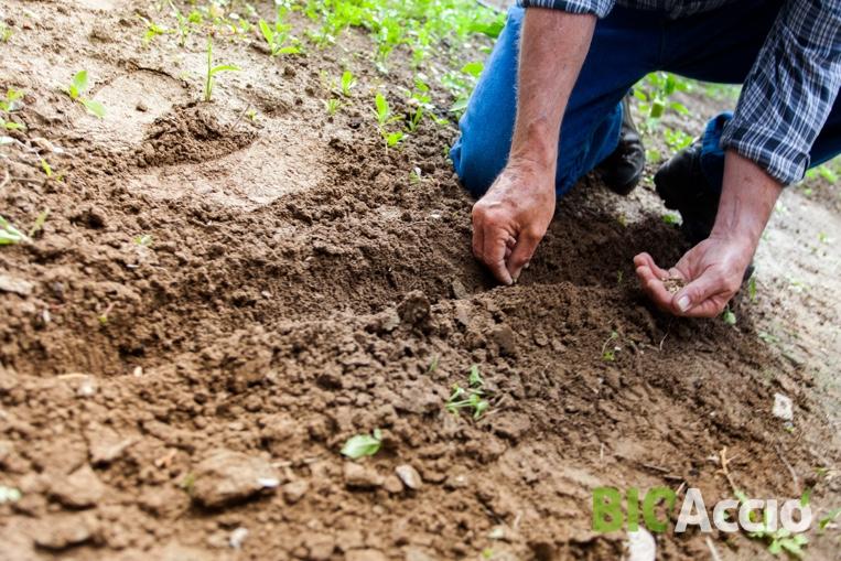 Horticultura-bio-accio-plagues