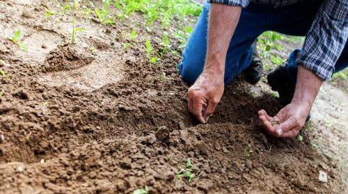 control de plagues en zones agraries